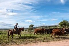 Gaucho herding cows near windmills, Uruguay Royalty Free Stock Photos