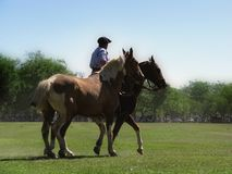 Gaucho with horses Royalty Free Stock Photo