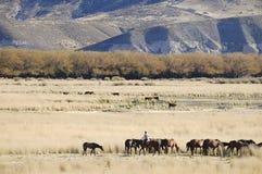 Gaucho im Patagonia - Argentinien stockbilder