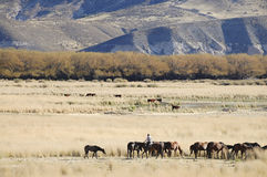 Gaucho nella Patagonia - Argentina immagini stock