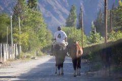 Gaucho que monta su caballo en Cafayate, la Argentina Foto de archivo