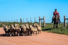 Gaucho van Cuchilla del Ombu, Tacuarembo, Uruguay Royalty-vrije Stock Fotografie
