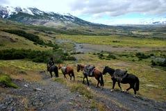 Gauchoridning i Torres del Paine Royaltyfria Bilder
