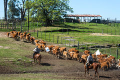 Gauchos in the campo, Uruguay Stock Images