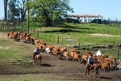 Gauchos dans le campo, Uruguay Images stock