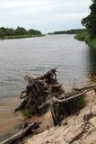 Gauja河海岸 库存照片