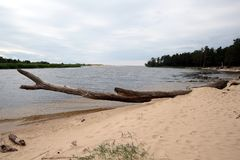 Gauja河 拉脱维亚 库存照片