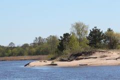 Gauja flod i vårtid Arkivfoton