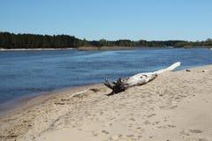 Gauja flod i vårtid Royaltyfri Foto