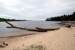 Gauja flod latvia arkivfoto