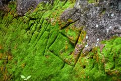 Gault Site: Petroglyphs royalty free stock photo