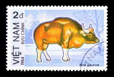 Gaur (Bosgaurus), utsatt för fara djurserie, circa 1984 Arkivbilder