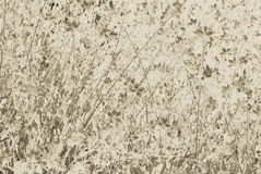 Gaura Sepia Floral texture Royalty Free Stock Photography
