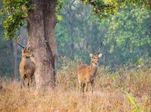On gaurd.. royalty free stock photography