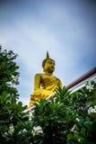 Gautama Buddha Statue Near Green Leaves Royalty Free Stock Images