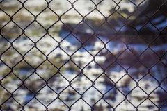 Gauze. Metal grid under the winter sunshine Royalty Free Stock Images