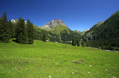Gaver. Piana del Gaver (Bs),Valley of Caffaro,Alps,Lombardy,Italy,view of the plain with the firs Royalty Free Stock Photos