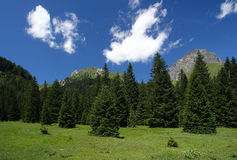 Gaver. Piana del Gaver (Bs),Valley of Caffaro,Alps,Lombardy,Italy,view of the plain with the firs Royalty Free Stock Photography
