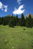 Gaver. Piana del Gaver (Bs),Valley of Caffaro,Alps,Lombardy,Italy,view of the plain with the firs Royalty Free Stock Photo