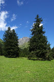 Gaver. Piana del Gaver (Bs),Valley of Caffaro,Alps,Lombardy,Italy,view of the plain with the firs Royalty Free Stock Images