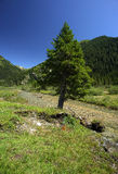 Gaver. Piana del Gaver (Bs),Valley  Caffaro,Lombardy,Italy,the river Caffaro Stock Image