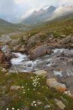 Gavia Torrent Royalty Free Stock Photos