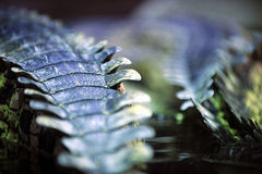 gavial δέρμα λεπτομέρειας Στοκ Εικόνες