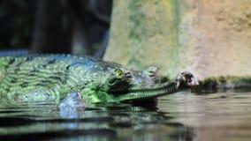 gavial инец Стоковые Фото