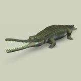 Gavialis gangeticus (Crocodile) Stock Image