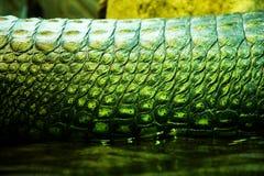 Gavials кожи Стоковая Фотография RF