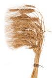 Gavilla de trigo Imagenes de archivo