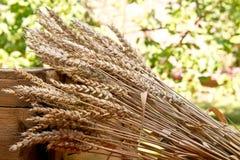 Gavilla de trigo Foto de archivo libre de regalías