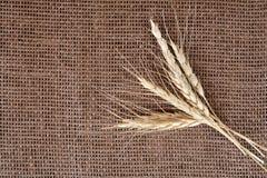 Gavilla de trigo imagen de archivo