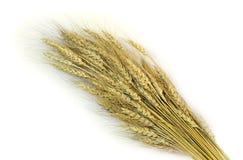 Gavilla del trigo Imagenes de archivo