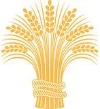 Gavilla madura del trigo Imágenes de archivo libres de regalías