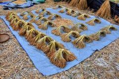 Gavilla seca de arroz en la tierra imágenes de archivo libres de regalías