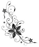 Gavinha, sumário, flores Fotografia de Stock