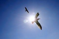 Gaviota altísima en cielo azul Foto de archivo