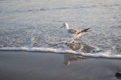 Gaviota cerca del océano Fotografía de archivo libre de regalías