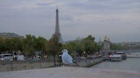 Gaviota contra la igualación de París Visión con la torre Eiffel y la costa, Francia almacen de video
