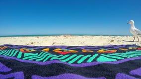 Gaviota curiosa que camina más allá de la toalla de playa Fotos de archivo