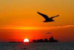 Gaviota de la puesta del sol y de la silueta Imagen de archivo libre de regalías