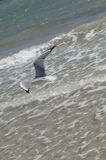 Gaviota de mar fotos de archivo libres de regalías