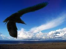 Gaviota de mar Imagenes de archivo