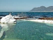 Gaviota de marea de la piscina Imagen de archivo