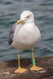 Gaviota del pájaro en el embarcadero Foto de archivo libre de regalías