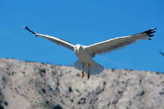 Gaviota del vuelo en el mar Mediterráneo Imagen de archivo libre de regalías