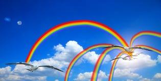 Gaviota del vuelo en sol del cielo con las nubes y el arco iris cielo azul con el fondo de las nubes Foto de archivo