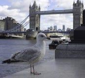 Gaviota delante del puente Londres de la torre imagen de archivo libre de regalías
