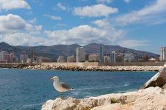 Gaviota en Calpe Espa?a con los hoteles de la ciudad y de la orilla del mar y apartamentos en fondo foto de archivo libre de regalías